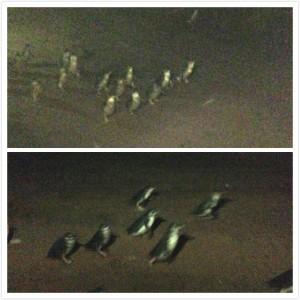 偷拍了企鹅大军的小部分